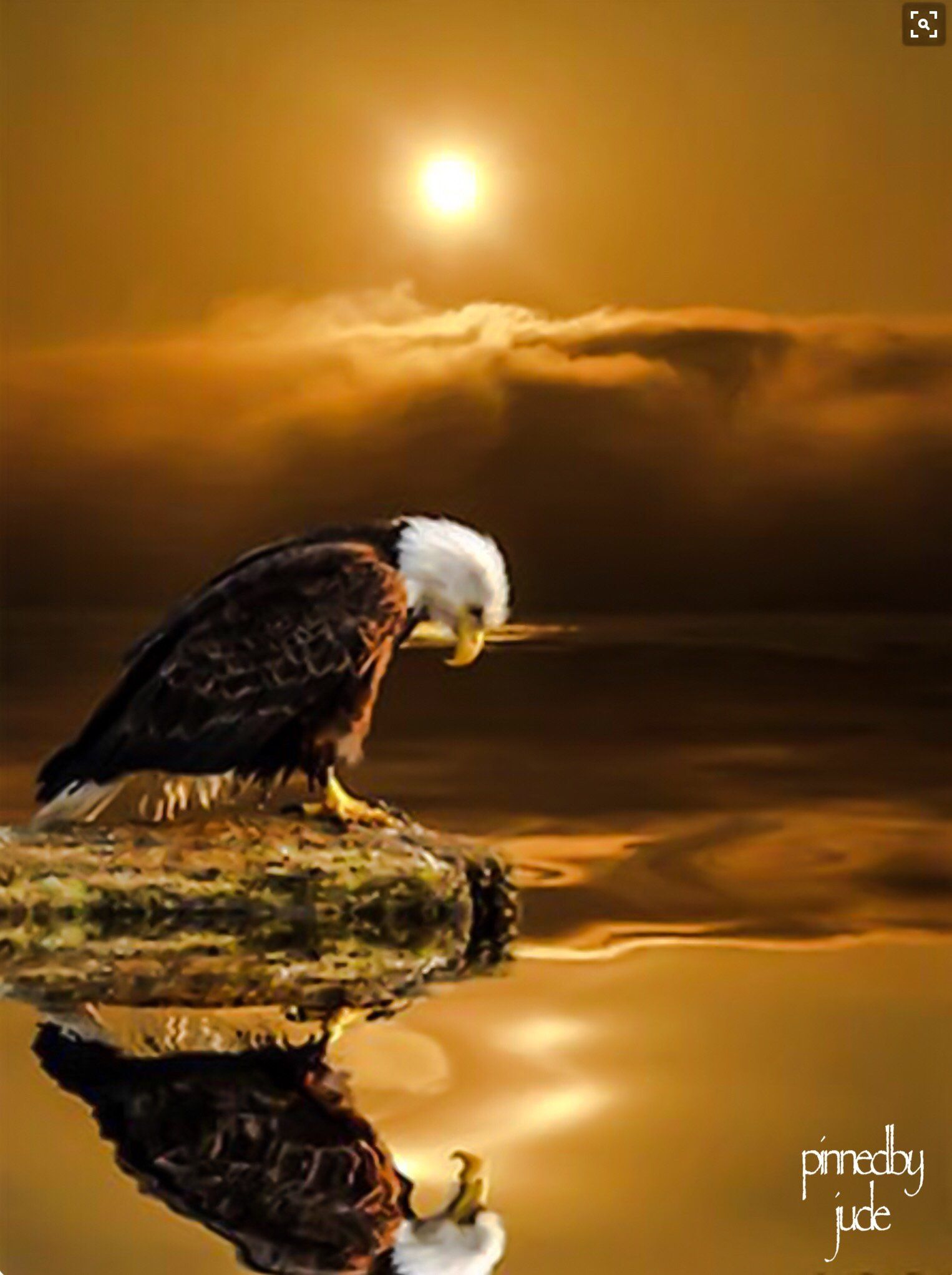 Bald Eagle at Sunset Gratitude Series Poster