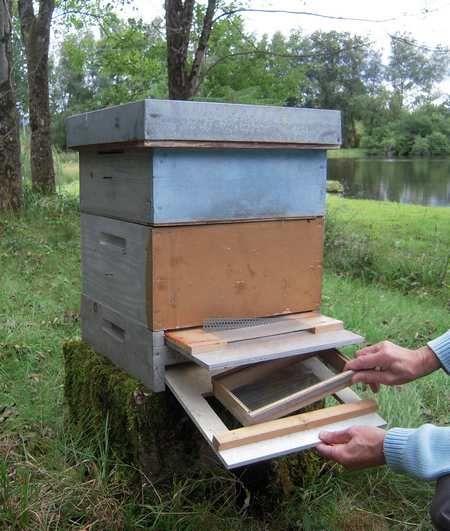 trappe pollen abeilles et apiculture pinterest apiculture ruche abeille et abeille. Black Bedroom Furniture Sets. Home Design Ideas