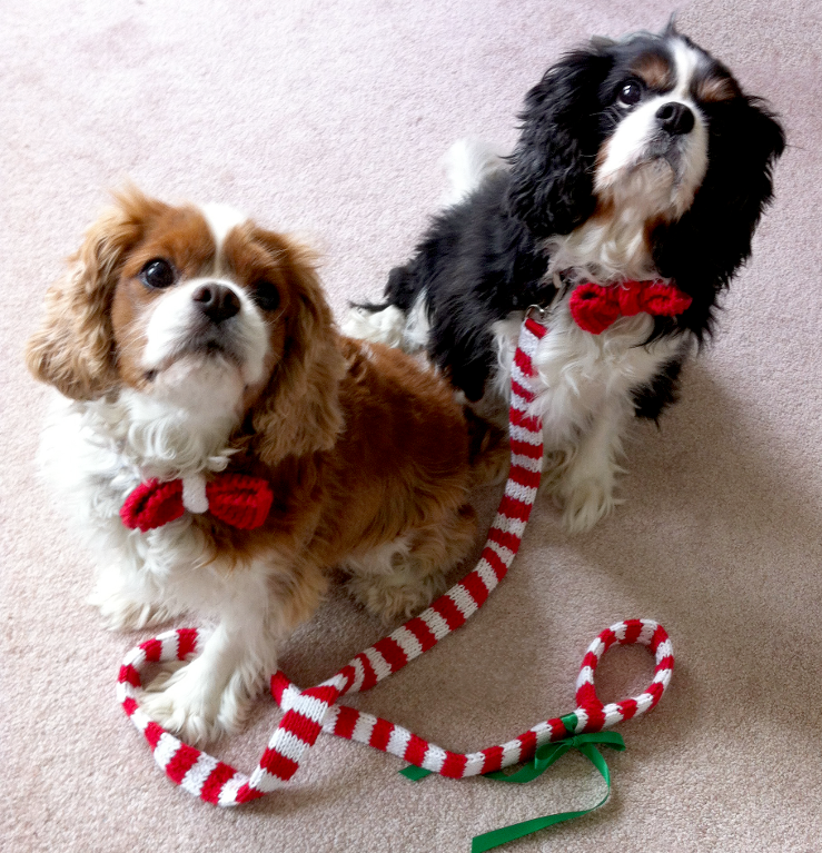 11 Knitting Patterns for Dogs from Craftsy!   Pinterest   Collar ...