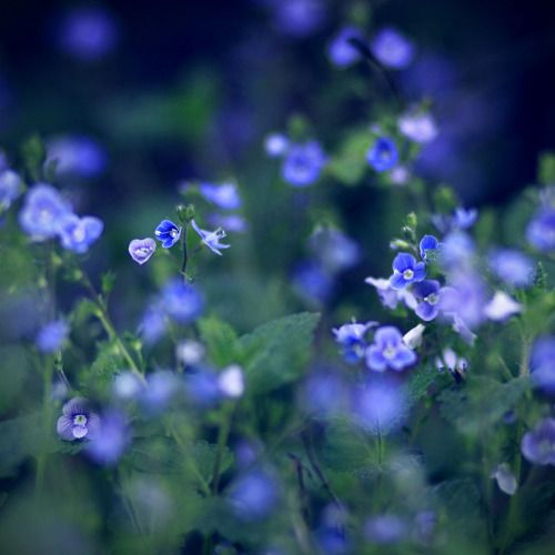 blooms-and-shrooms:  midnight. by BlueFish24