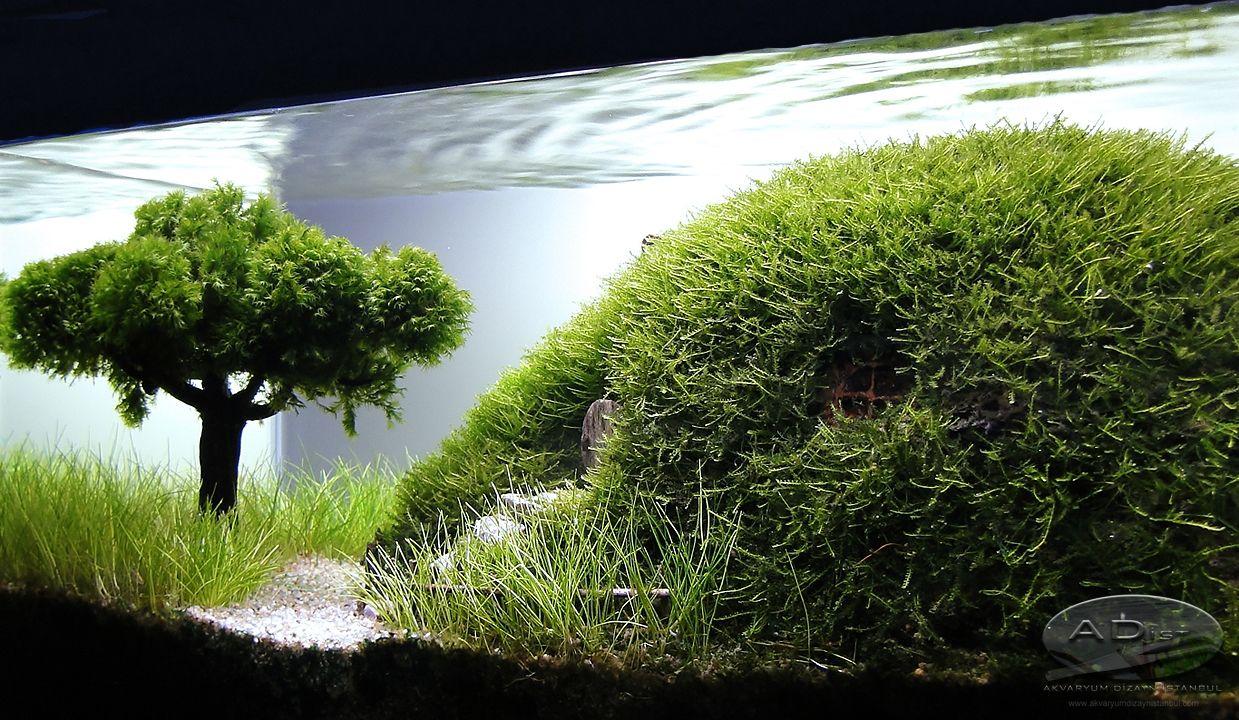 Aquarium Hobbit House