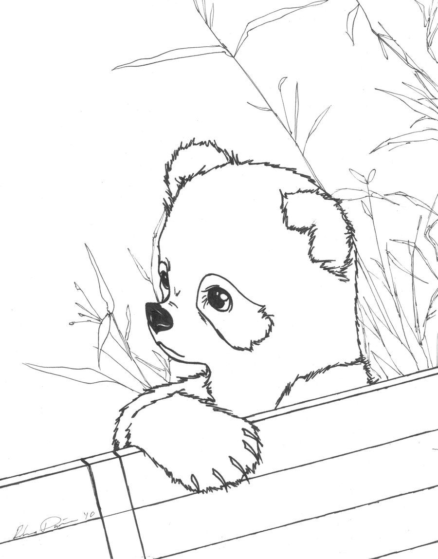 Cute Baby Panda Coloring Pages Bear Coloring Pages Cute