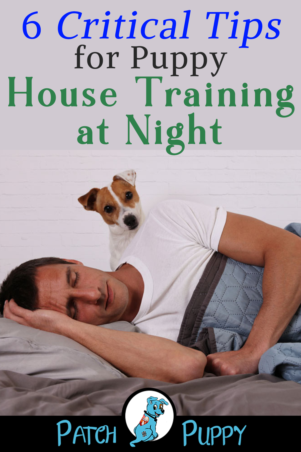 6 Critical Tips For Puppy House Training At Night House Training
