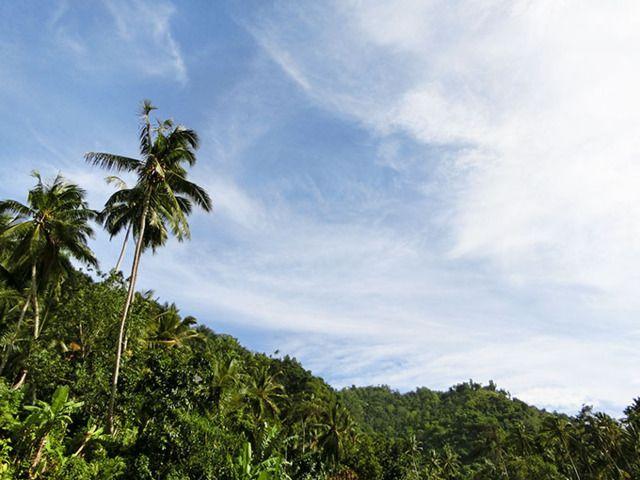 6/3(金)バリ島ウブドのお天気は晴れ。室内温度28.0℃、湿度67%。セミがミンミン鳴き、ギラギラの太陽が昇ってきました。朝晩冷え込みますが、昼は暑い!!
