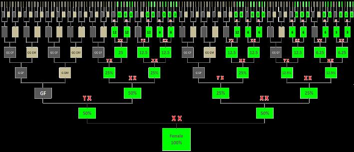chromosome percentage inheritance chart female also genealogy dna rh pinterest
