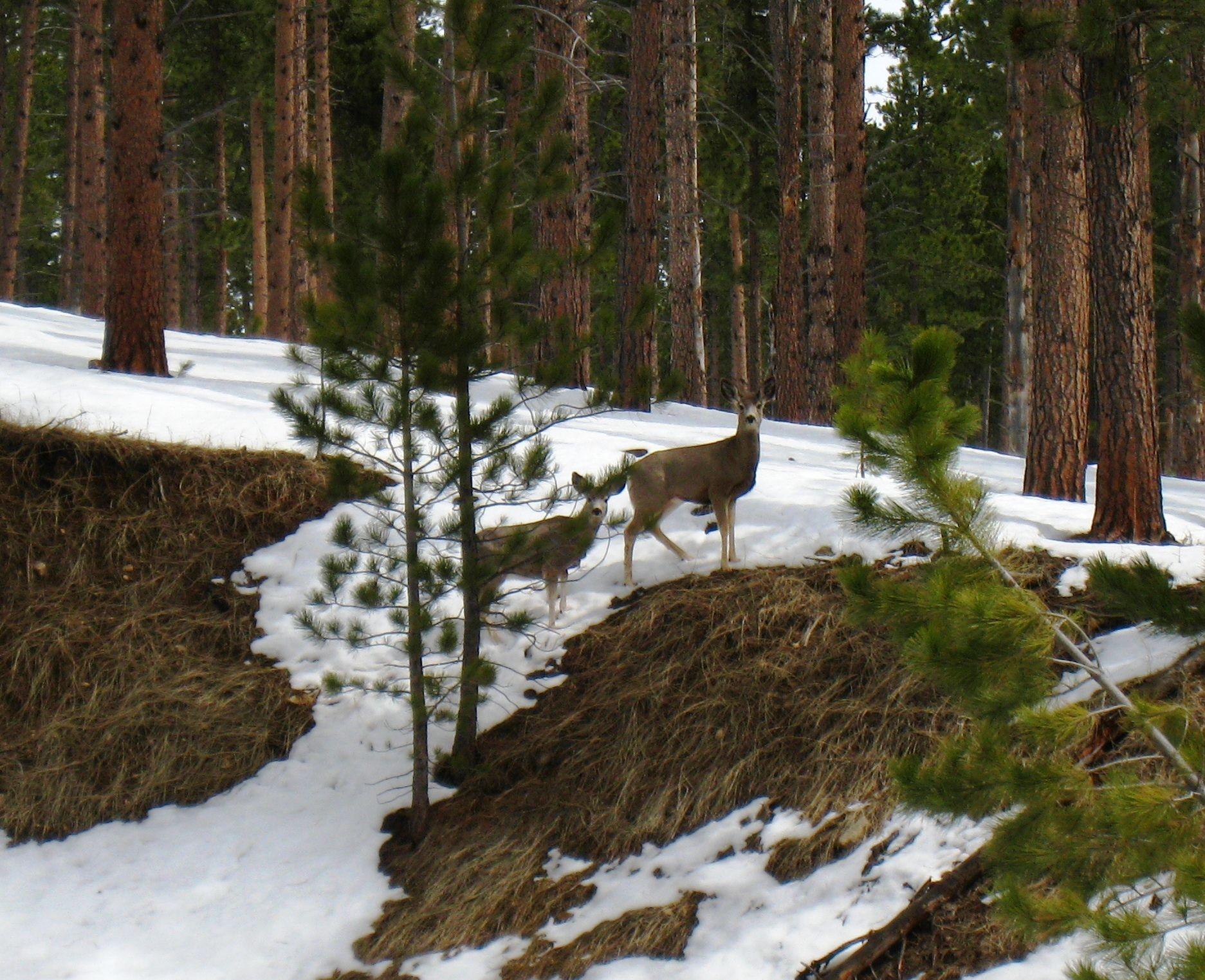 North ridge cabin black hills south dakota wildlife for Cabine black hills south dakota
