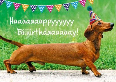 Dackel Hund Happy Birthday Geburtstags Postkarte Grusskarte Alles Gute Zum Geburtstag Humor Alles Gute Zum Geburtstag Hund Lustige Geburtstagsgrusse