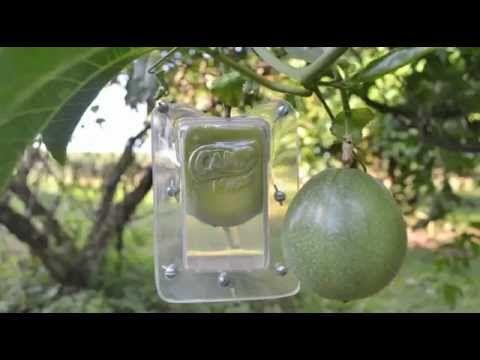 Envases para frutas - CAMP