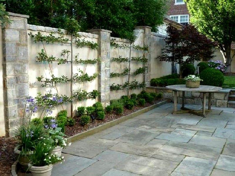 palmettes horizontales 4 tages un espalier ou palmette dans votre jardin pinterest jardins. Black Bedroom Furniture Sets. Home Design Ideas