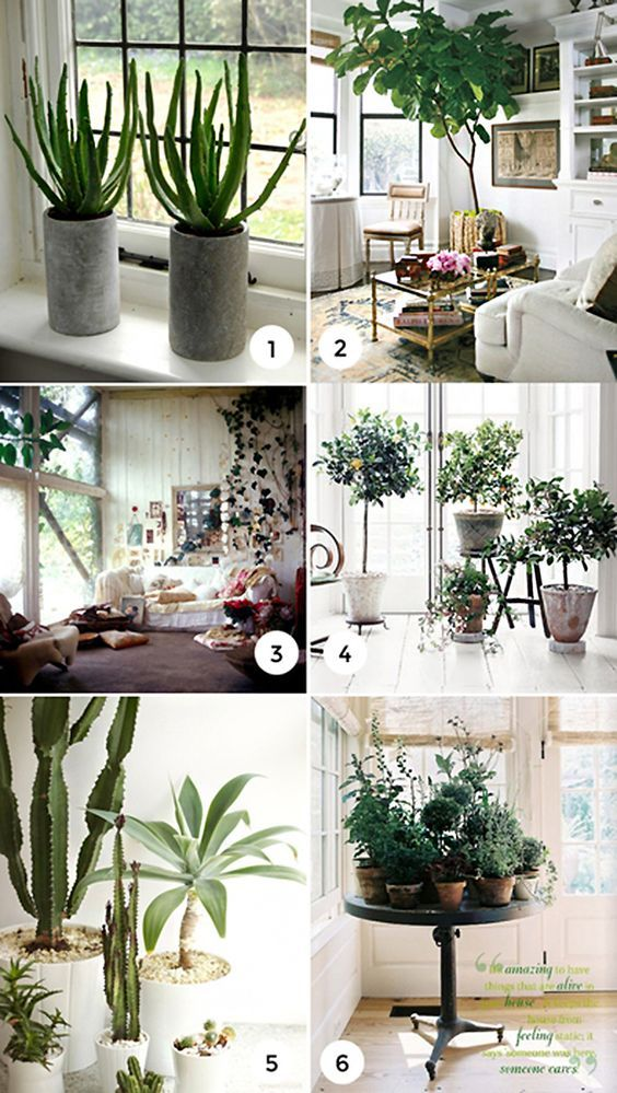 7 Potted Plants To Create The Perfect Indoor Oasis Best 400 x 300