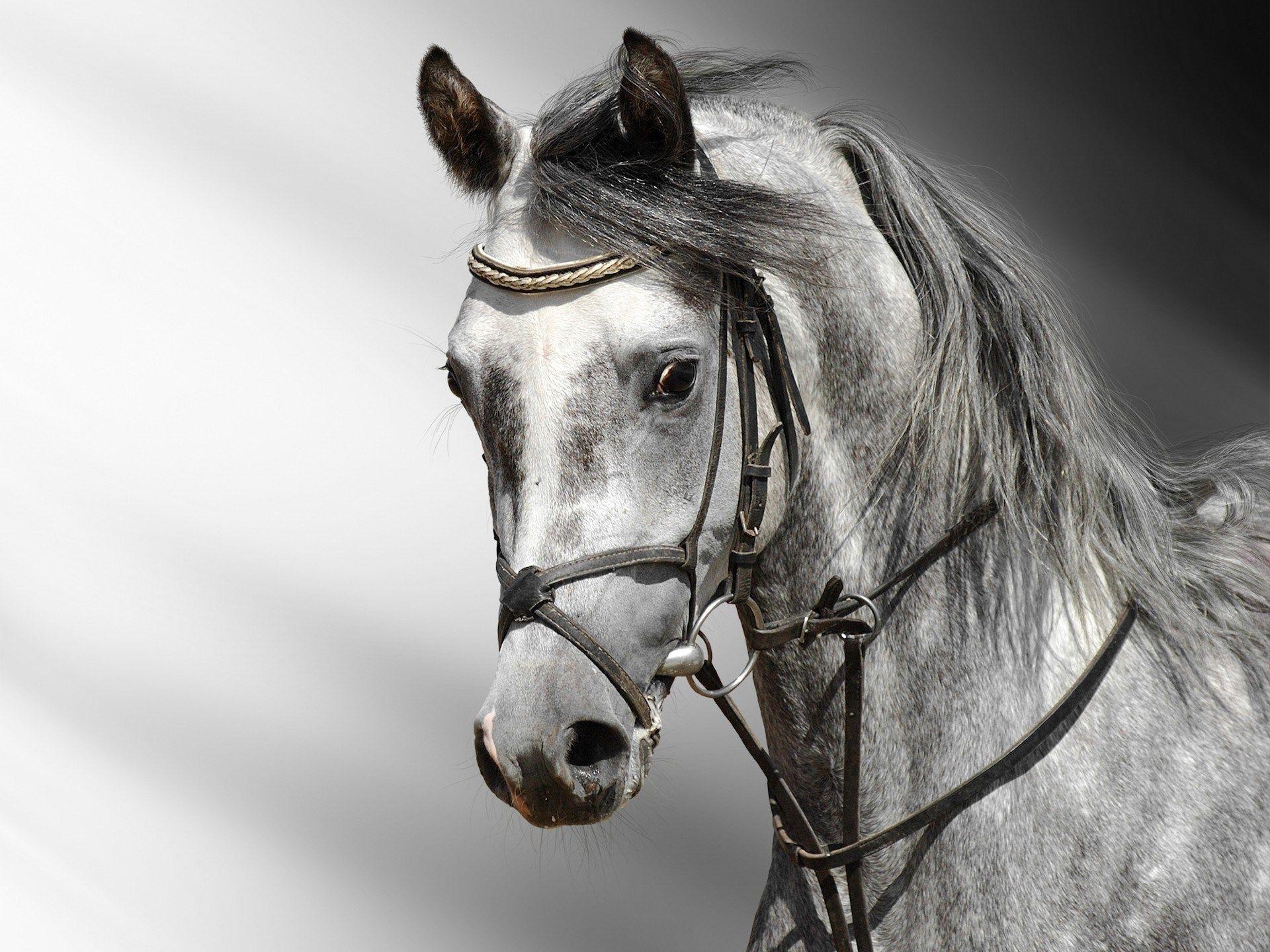 Best Wallpaper Horse Fairy - cdbcaeb624738c5b4f82e19544bf127f  HD_363626.jpg