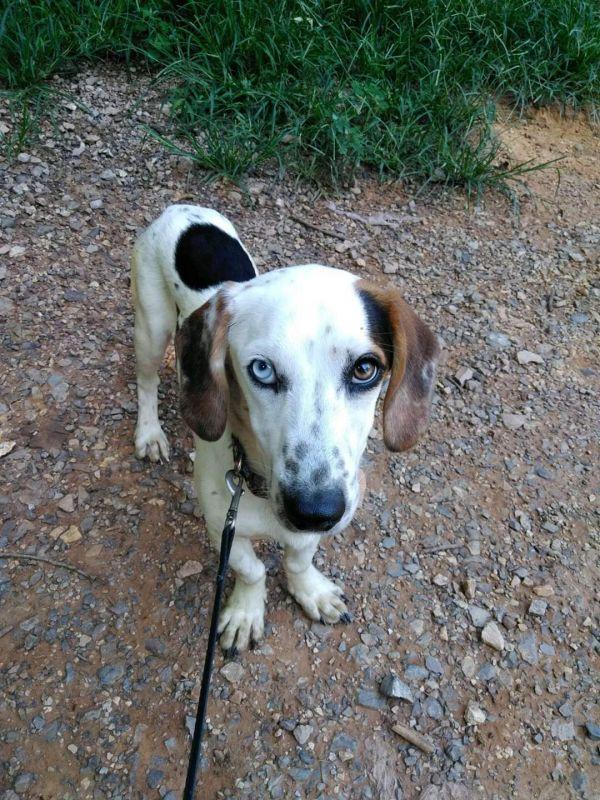 Pets for Adoption Petfinder Pet adoption, Pets, Dog breeds
