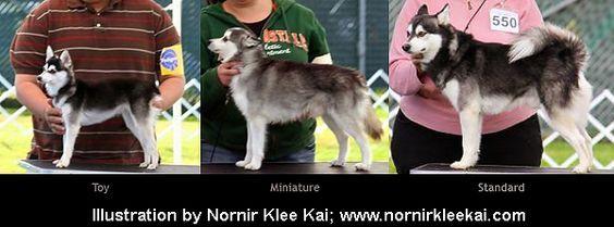 Alaskan Klee Kai Size Comparison