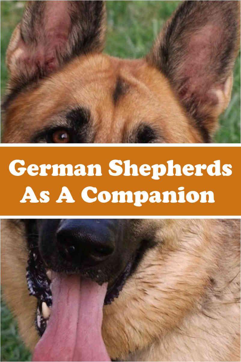 Are German Shepherds Good Family Pets Dog Training Tips Pet