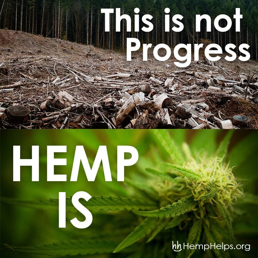 like if you believe hemp should be our number one paper source like if you believe hemp should be our number one paper source and not trees legalize cannabiscannabis