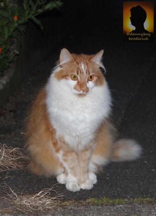 Hairy Ear Cat Hairy Ears Cats Furry Friend