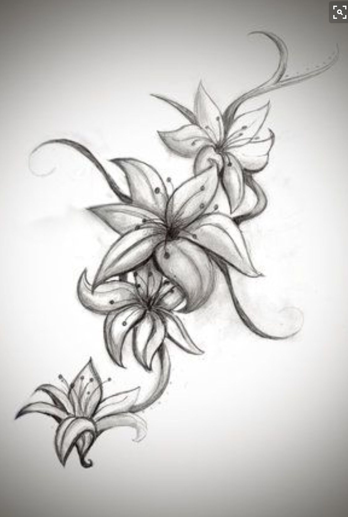 Pin by mitzie beyer on tatts pinterest tattoo tatoo and tatting lily tattoos start with the two middle lilys first izmirmasajfo