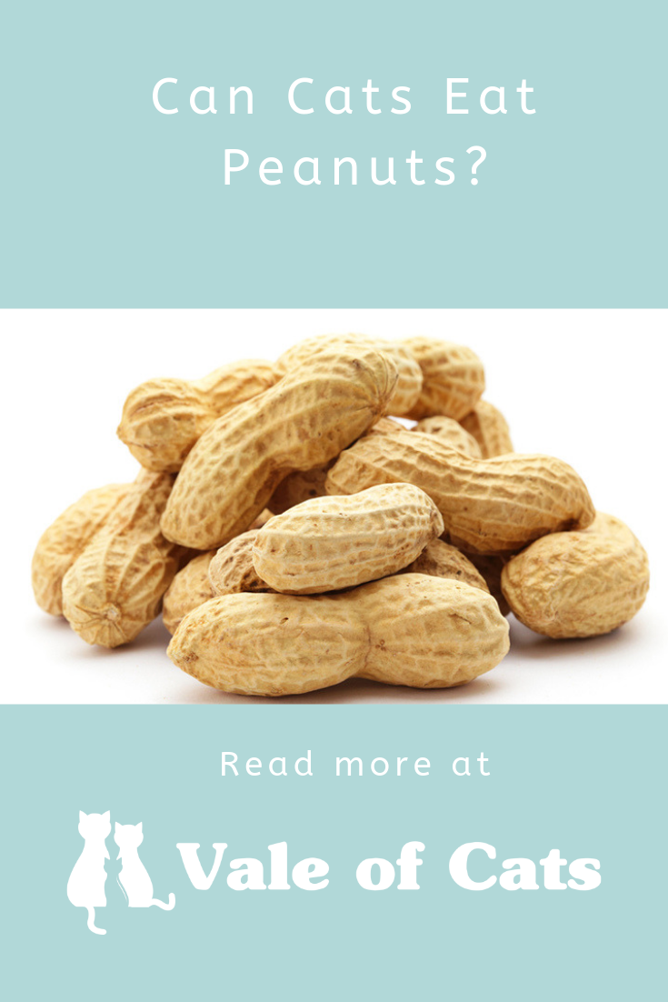 Can Cats Eat Peanuts? Eat, Cat nutrition, Food