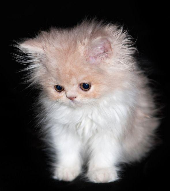 I Mean Come On How Can Anyone Not Like Cats Cutie Little Kumpir Via Good Morning Kitten Kittens Cutest Cute Kitten Pics Animals