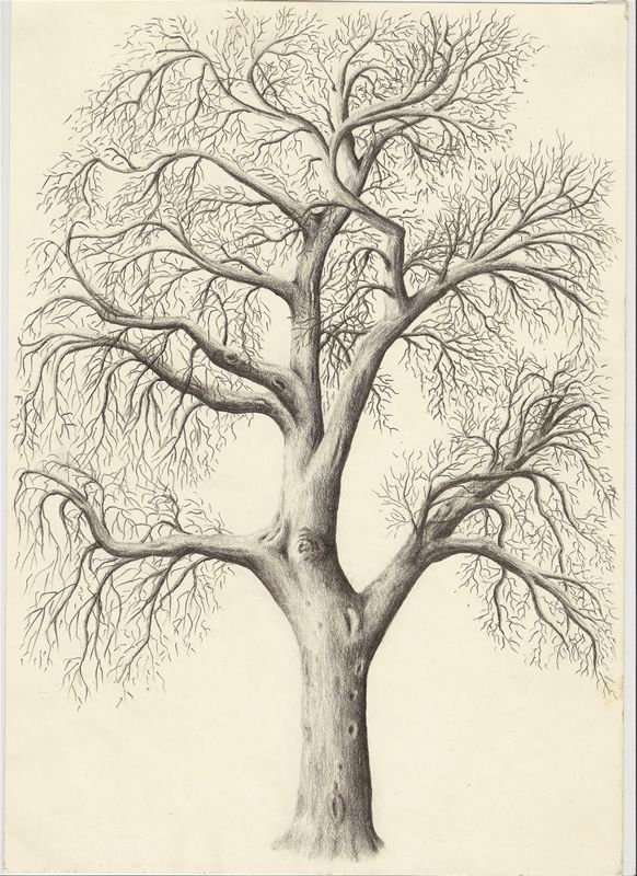 Pencil drawing of a tree drawing of a
