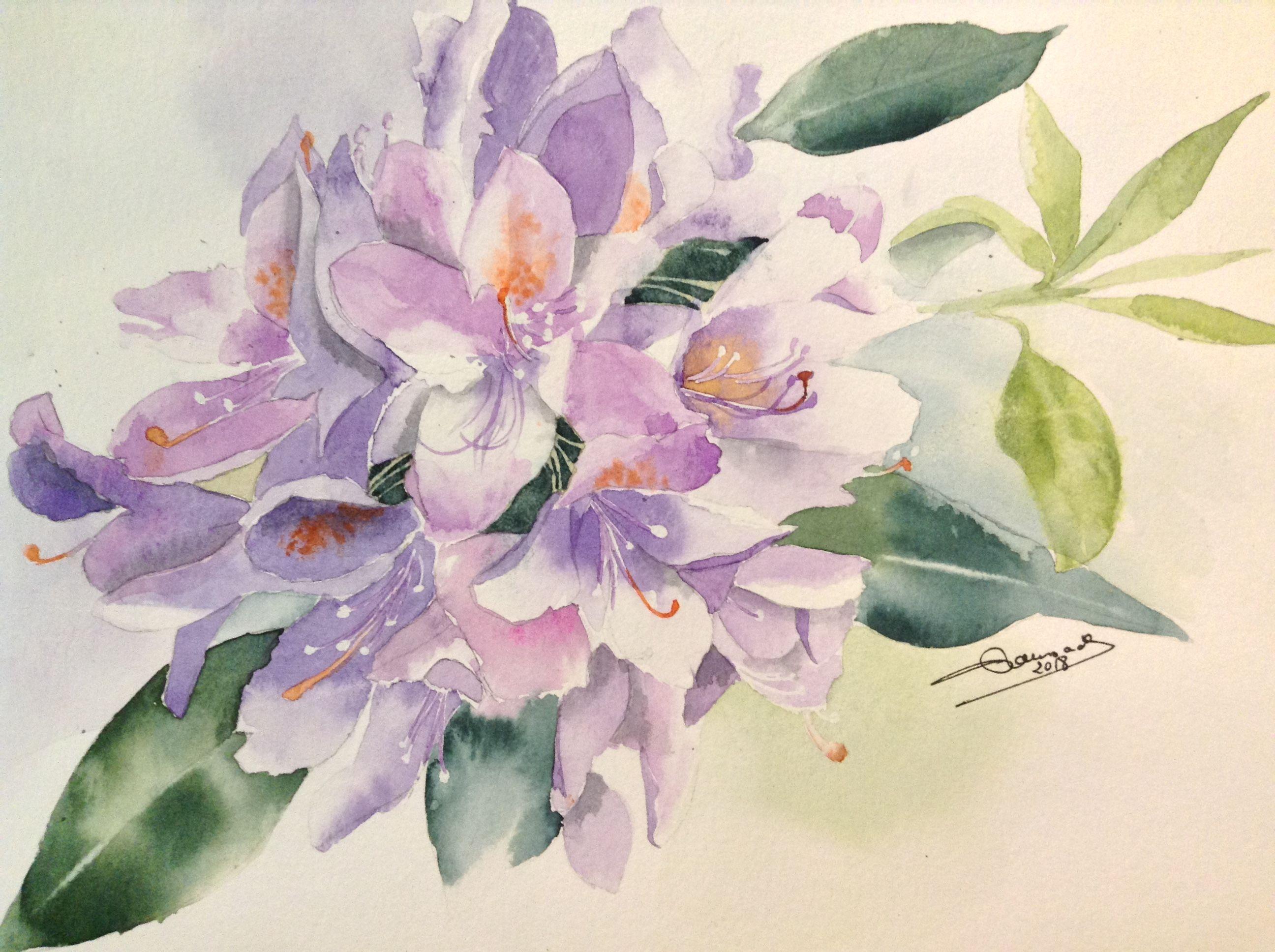 Le Rhododendron Sur Canson Xl 300 Gr Peinture Aquarelle