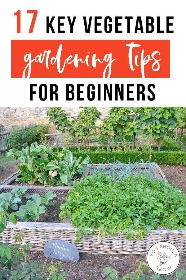 17 Wichtige Tipps zum Anbau von Gemüse für Anfänger #Anfänger #Gemuseanbau # #anbauvongemüse