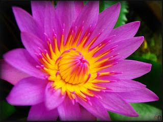 Flowers Around The World The National Flower Every Country S Flowers Water Flowers Water Lily