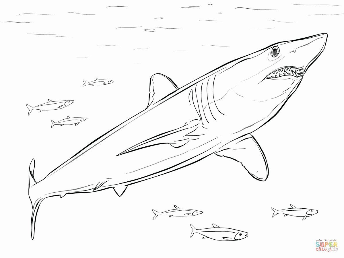 Great White Shark Coloring Page Lovely Great White Shark Coloring Pages To Print Shark Coloring Pages Great White Shark Drawing Shortfin Mako Shark