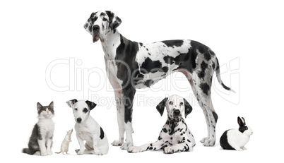 Group portrait of black and white animals in front of white back - royalty-free photo starting at $2.57