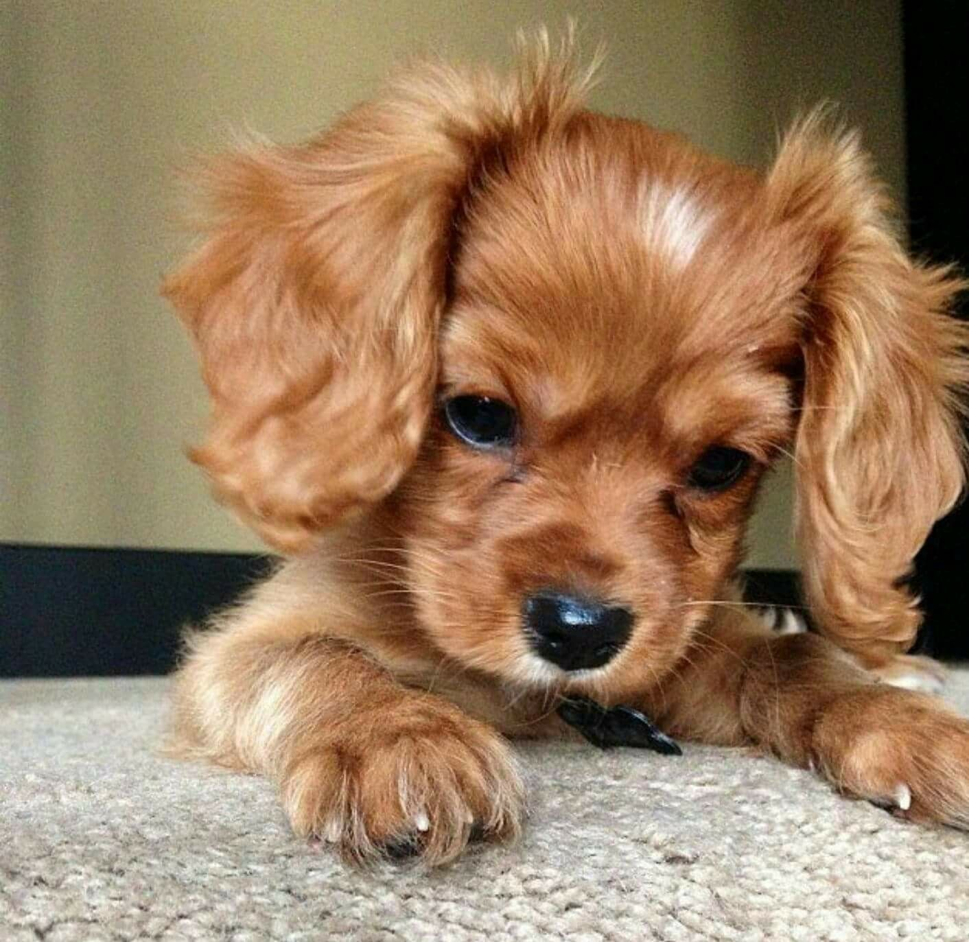 Pin by Imama on A Dose Of CUTEness Pets, Cute baby