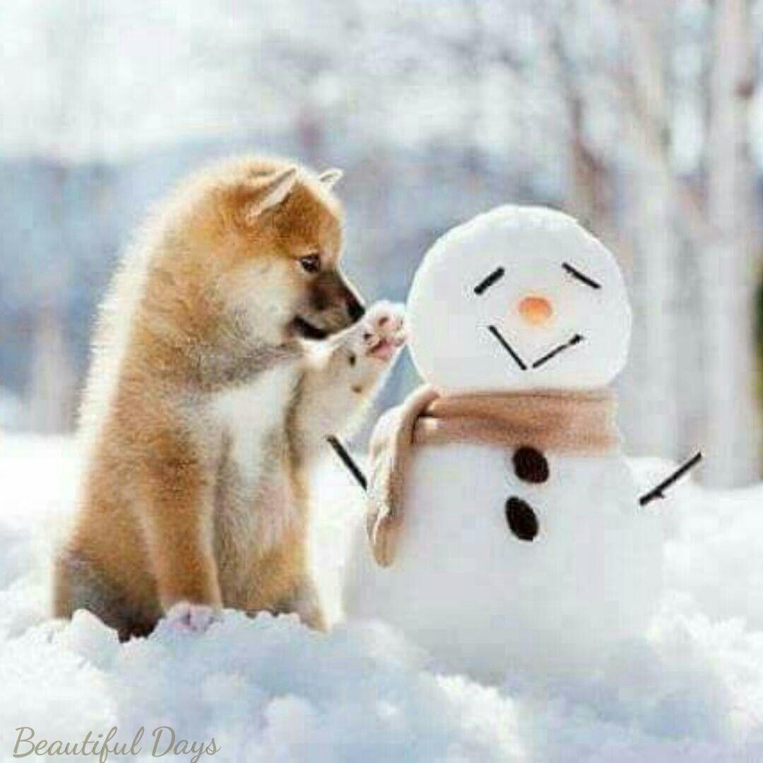 Pin em Winter