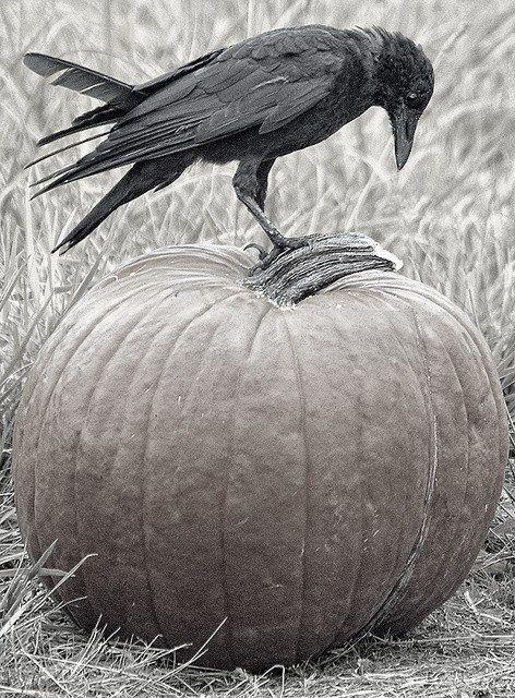 Crows mystic animals dark arts in art ravens