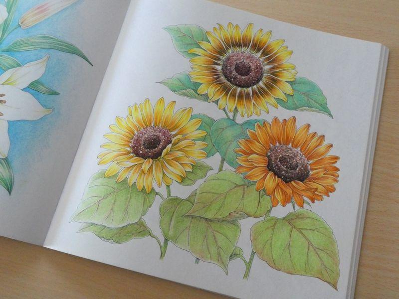 完成 プリズマカラーでヒマワリの塗り方紹介です 花日和花だよりより 塗り絵日記 花の塗り絵 プリズマカラー 塗り絵