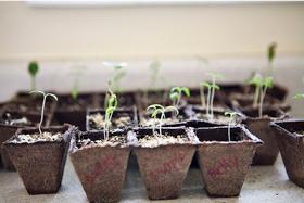 Backyard Farming: How to start seeds