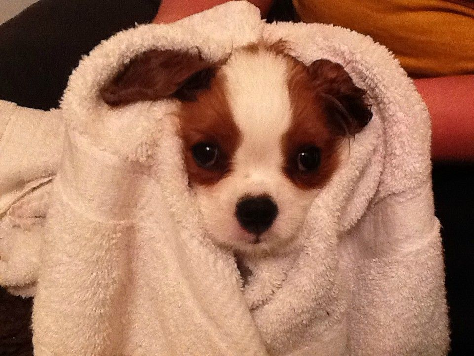 Fwuffy Pup Cute Puppies Baby Animals Puppies