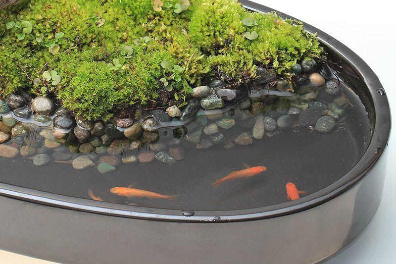 新しいメダカ飼育の楽しみ方 Bon Style 盆スタイル こけ庭 水のある庭 ミニチュアガーデン