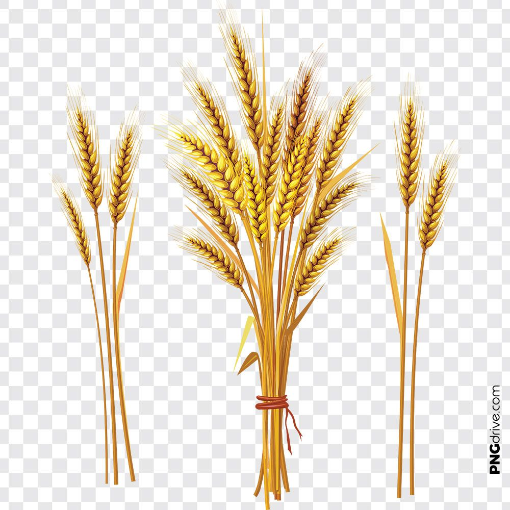pin by png drive on wheat flour png images clip art png wheat flour pinterest