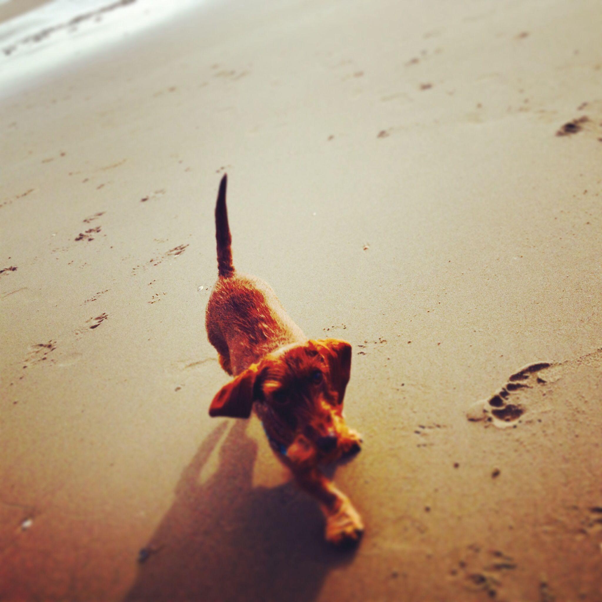 Kareltje op t strand met n lekker zonnetje!