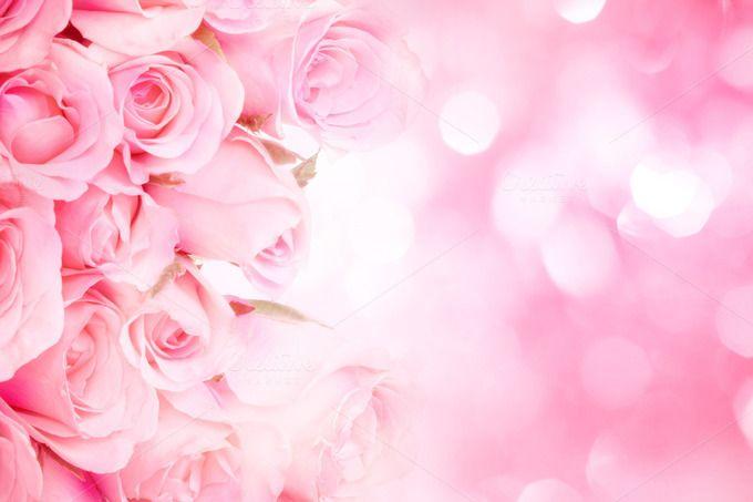 Sweet Pink Rose Background Pink Roses Background Rose Background Flower Background Wallpaper