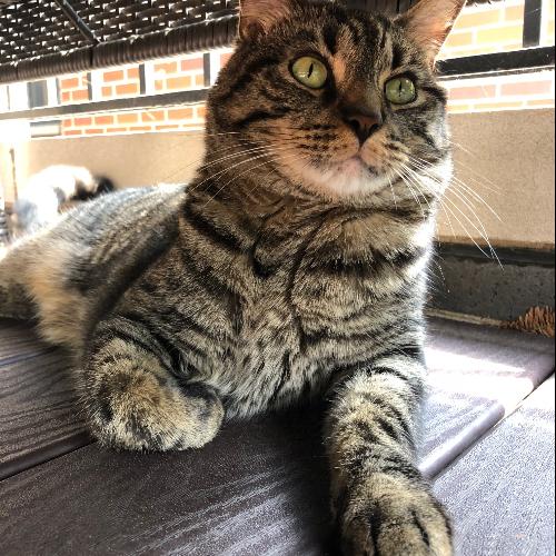 Photo Of A Cat Named Riley Pet Adoption Near Me Dog Adoption Pet Adoption