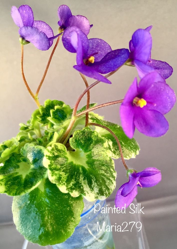 African Violet Plant Painted Silk Ebay