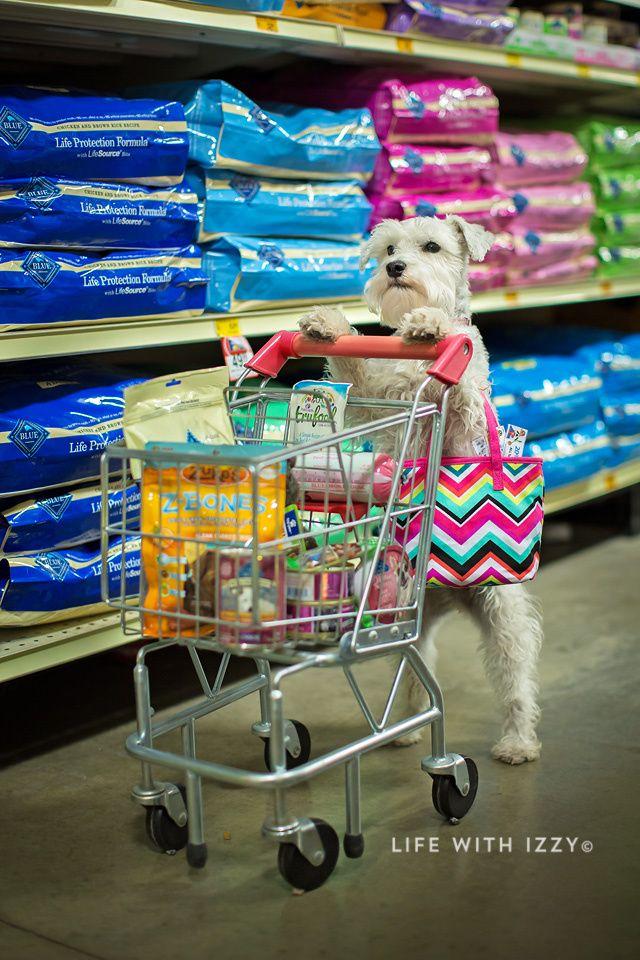 My Dog Is Shopping For Blue Buffalo Petsmart Miniature