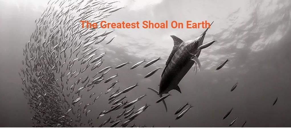 Great article in #ScubaDiving magazine about the #SardineRun - The Greatest Shoal On Earth https://goo.gl/CGiDmD