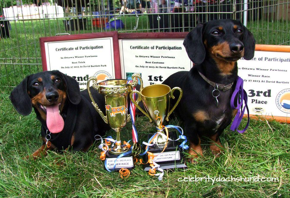 Wiener Dog Race Costume Contest Wiener Dog Weiner Dog Weenie