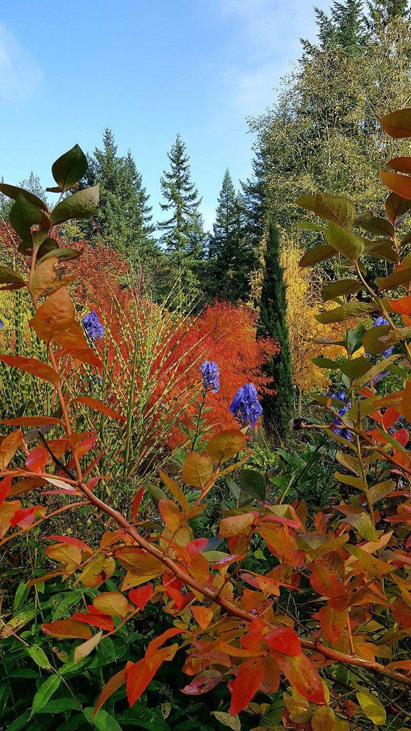 Scenes from a Great Season, Part 2 | Gardening | Pinterest | Scene ...