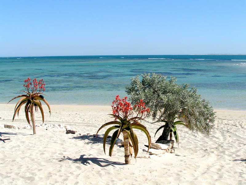 anakao beach - Tulear, Toliara (avec images) | Jardin de plantes ...