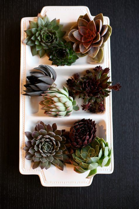 Ode to Succulents