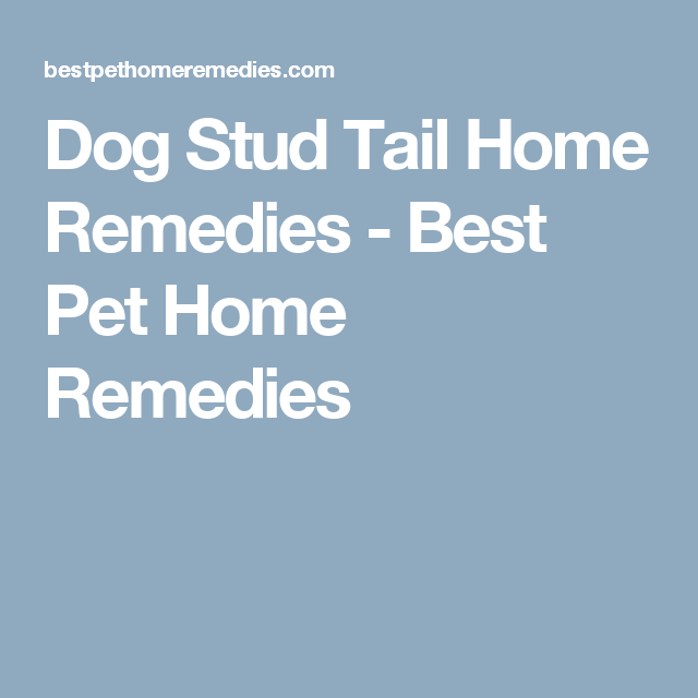Dog Stud Tail Home Remedies Best Pet Home Remedies Home Remedies Pet Remedies Pet Home