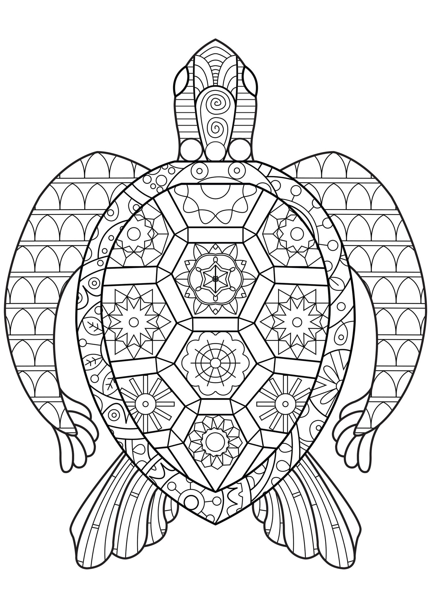 Pin by Mia Bennett on Printables   Turtle coloring pages ...