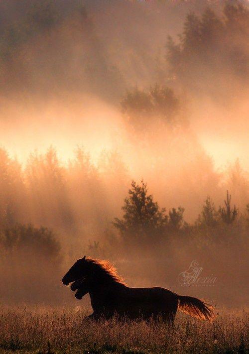 Horses running in the field with sunlight filtering thru
